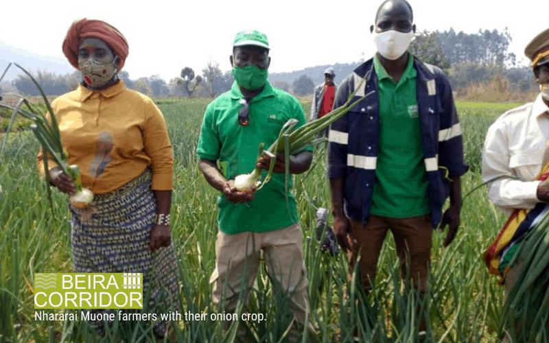 Beira Corridor Public-Private partnership - Nhararai Muone farmers with their onion crop.